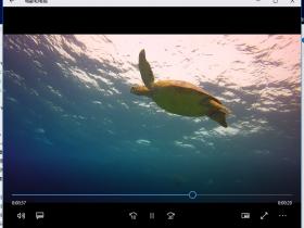 海龟-视频素材