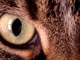猫闭眼-高清视频素材