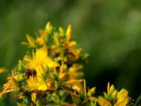 蜜蜂-高清视频素材