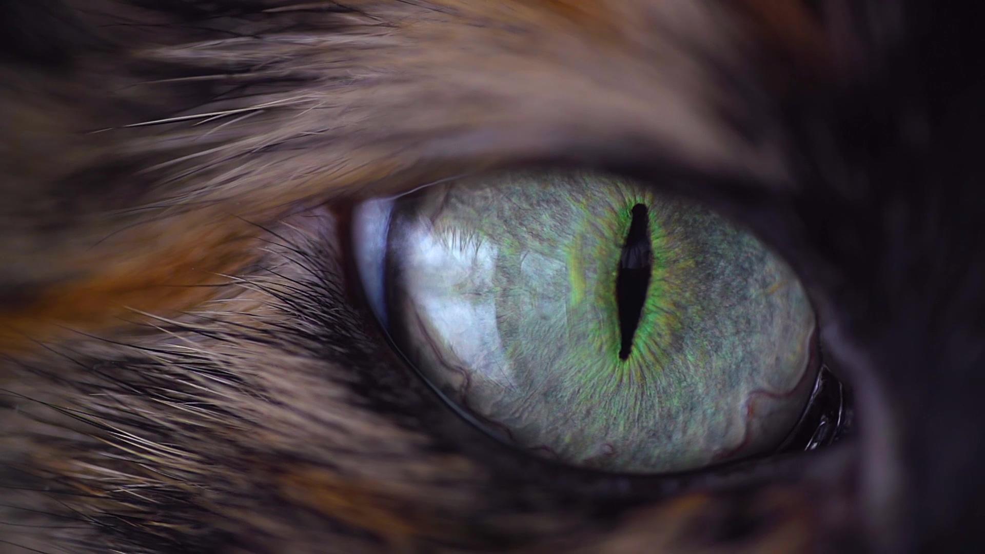 猫眼-高清视频素材