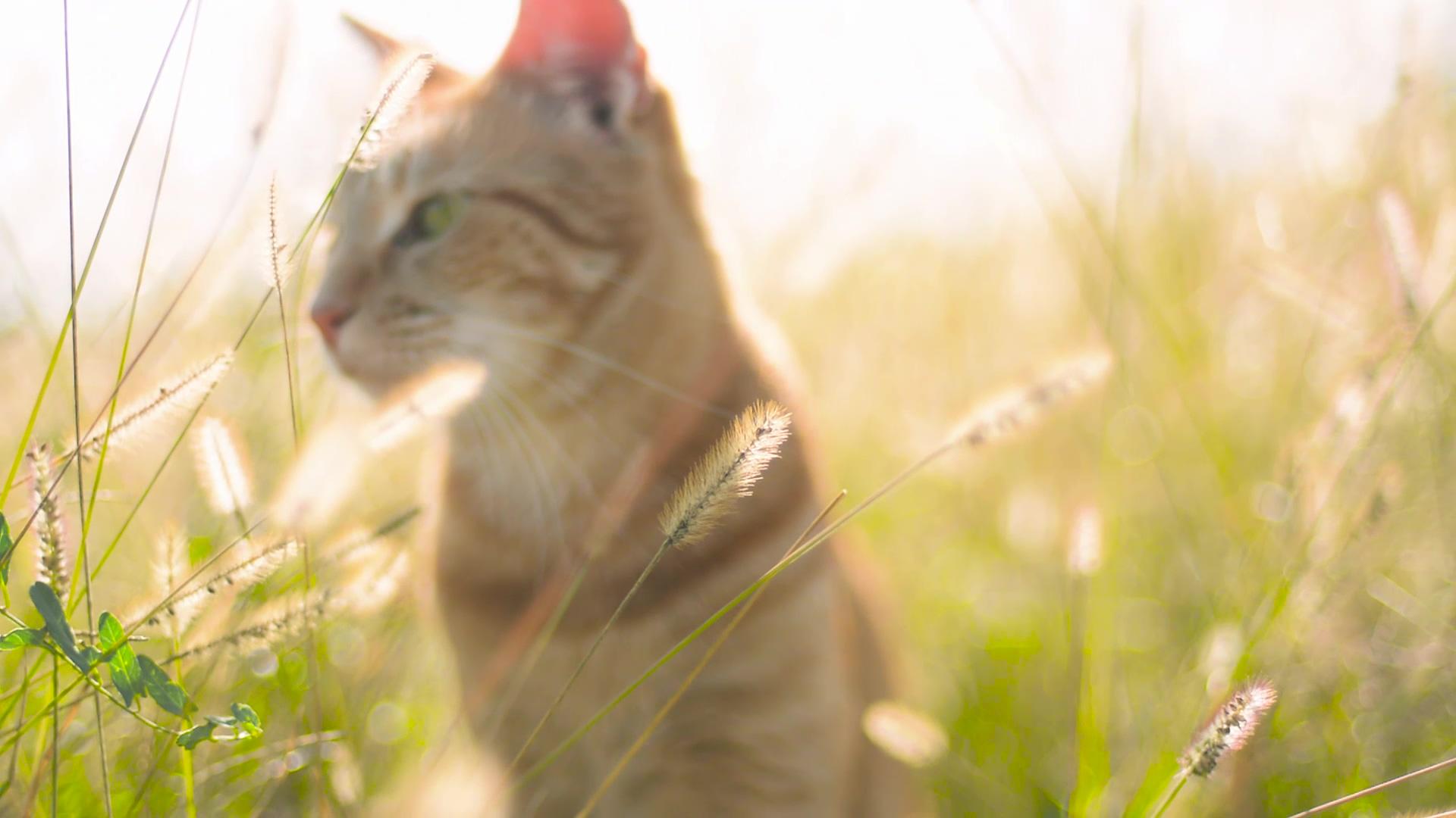 阳光下的小猫-高清视频素材